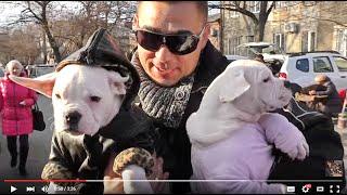 """СОБАКИ на """"Староконном"""" рынке в Одессе. Dogs on the """"Starokon"""" market in Odessa."""