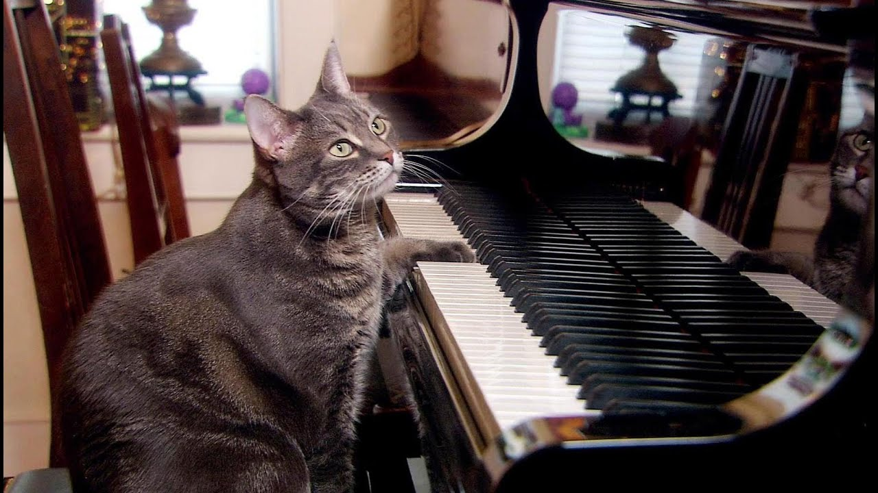 Youtube Cat Playing Piano