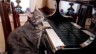 Nora the piano playing cat - Extraordinary Animals - Series 2 - Earth