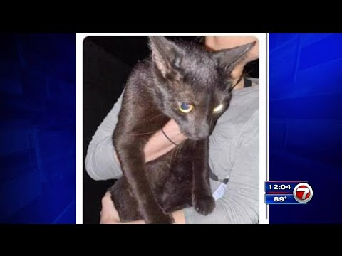 Cat missing after Surfside condo collapse found alive