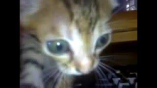 Innocent Pussy Cat.3gp