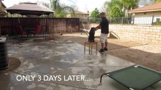 Cody  7mo Lab Day 3 Progress: San Diego California Dog Training.