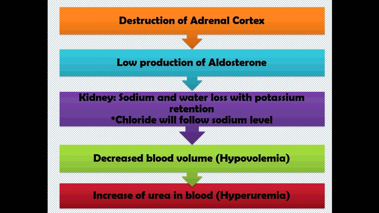 Pathophysiology Addison's Disease - YouTube