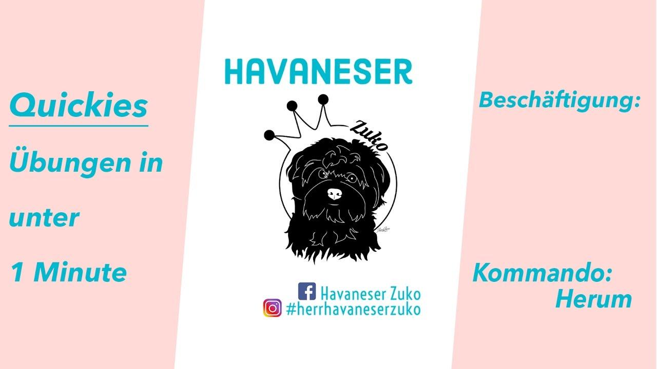 Hunde Beschäftigen Übungen Mit Havaneser Zuko Thema Herum YouTube