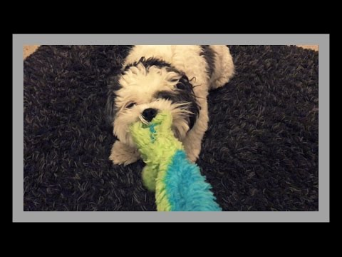 AMAZING Dog Playing With His Favorite Toy
