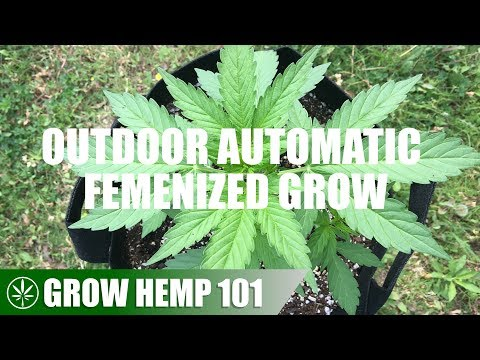 Timelapse Outdoor Automatic Grow From Seed To Harvest