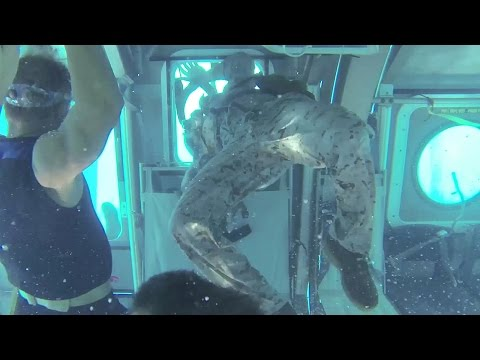 Helo Dunker – Helicopter Underwater Egress Training