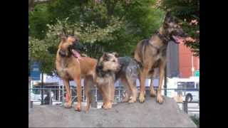 Best Friends Dog Training Nyc Www.muttmanners.com