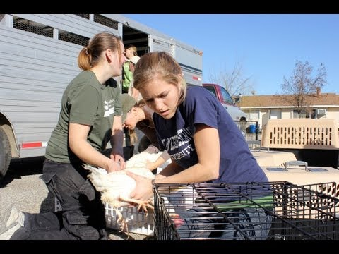 Second Largest Farm Animal Rescue Effort in U.S. History