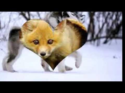 Animaux trop choux trop mignons youtube - Des animaux trop mignon ...