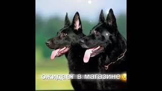 Эдиты собак моё видео Популярное Длядетей edits dog Эдит