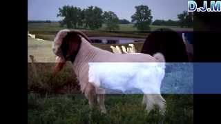 Τραγίλα Tranquila Video - Constantine Cullen VIDEO DJM