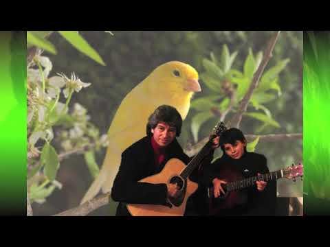 el-vuelo-y-canto-de-un-canario-en-aprender-es-crecer,-viernes-8-de-junio---restaurante-mi-bandera