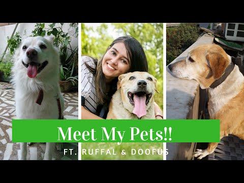 Meet my pet dogs! | Vet Visit
