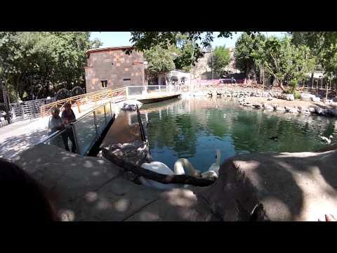 Ереван зоопарк