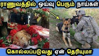 ஓய்வு பெரும் ராணுவ நாய்களின் கதிய பாருங்க | Tamil News Latest Seithigal