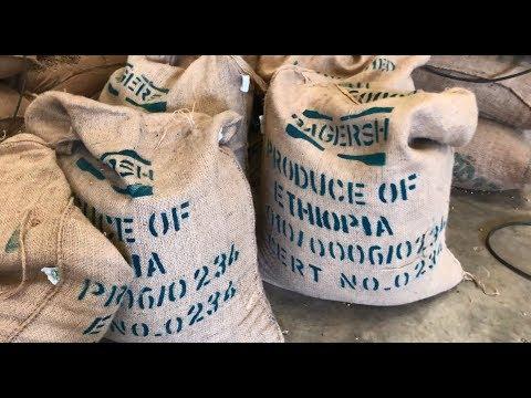 A Peek Inside An Ethiopian Coffee Plant