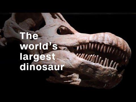 Titanosaur: The world's largest dinosaur