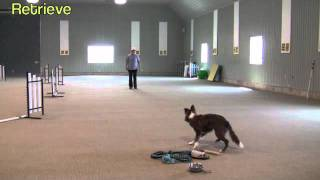 """positive"" Dog Training Sgda"