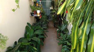 Adubo Caseiro Para Deixar Suas Plantas Ainda Mais Bonitas