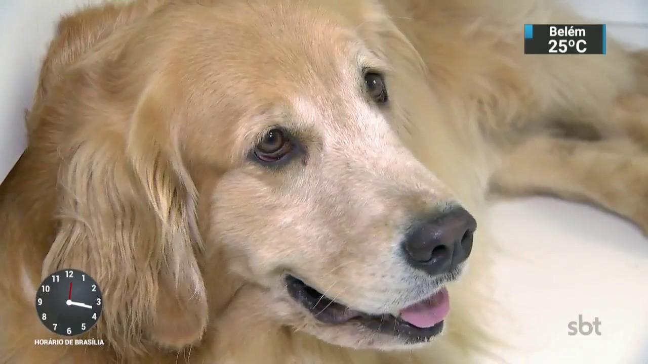 Pequisa mostra que ter cachorros diminui risco de ATAQUE CARDÍACO