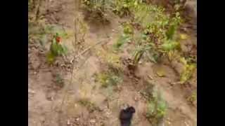 http://www.mathstrength.com- Marar -Planta medicinala -Farmacia naturii