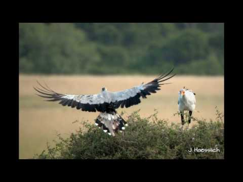 Nesting Secretary Birds at Eastern Cape Safari Lodge