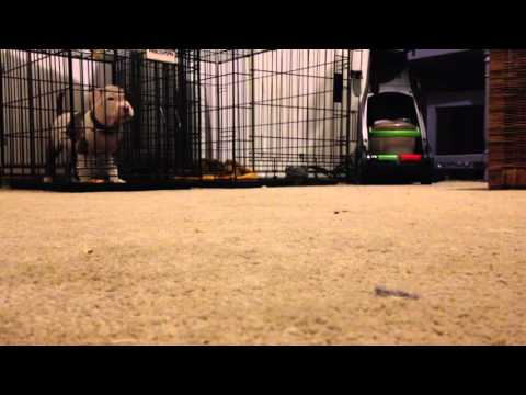 This newly rescued puppy was magically escaping his crate. Can you guess how?