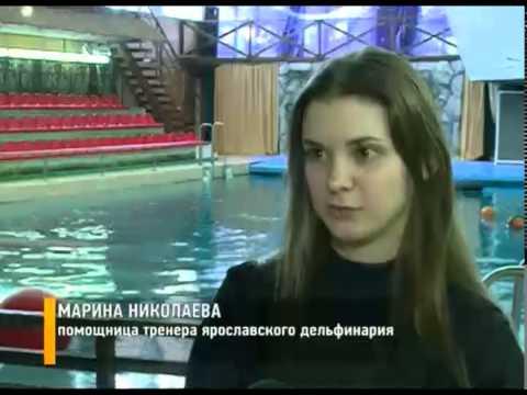 В ярославском дельфинарии появился новый воспитанник
