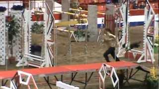 Kaya at the Dog & Horse Relay - Royal Winter Fair, Brandon Manitoba 2012