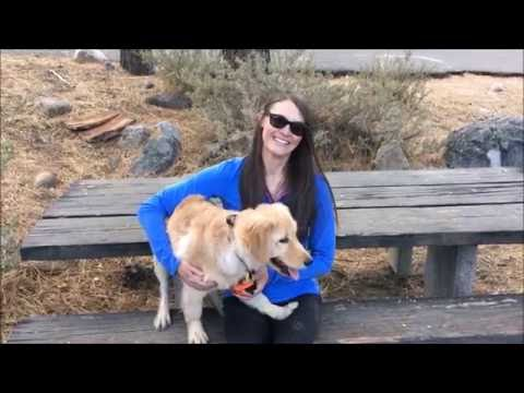 Golden Retriever Puppy has AMAZING Training; Reno Dog Trainers