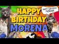 Happy Birthday Morena! Crazy Cats Say Happy Birthday Morena (Very Funny)