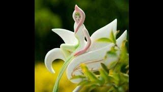 Girl shape flowers,Amazing,Beautiful Queen shape flower,looks nice