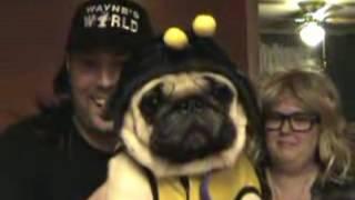 Pug & Puggle Costumes
