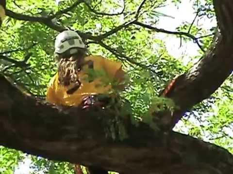 """Bernd """"Beddes"""" Strasser - Winning Master's Challenge, Hawaii ITCC 2007"""