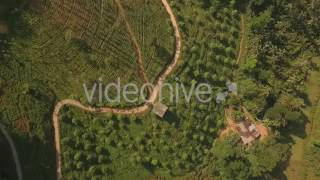 Downward Flyover a Tea Estate - Stock Footage | VideoHive 15148662