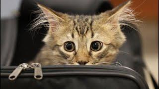 Кот сидел в переноске с перепуганными глазами – он стал не нужен хозяевам и его решили усыпить…