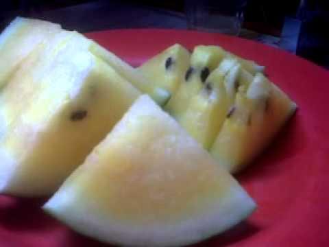 buah semangka untuk meningkatkan jumlah sperma