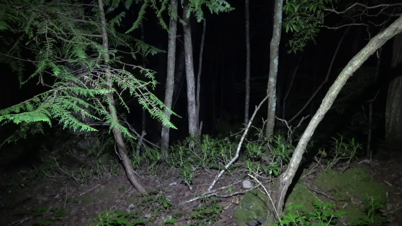 Aokigahara, Suicide Forest solo ghost hunt, part 2 - YouTube