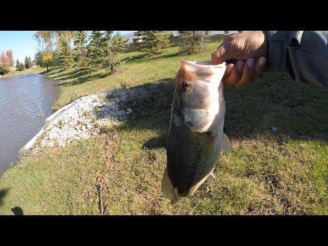 Fishing In Aurora Illinois
