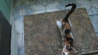 Кошка Кузя и новая кошачья таблетка 16  -:)