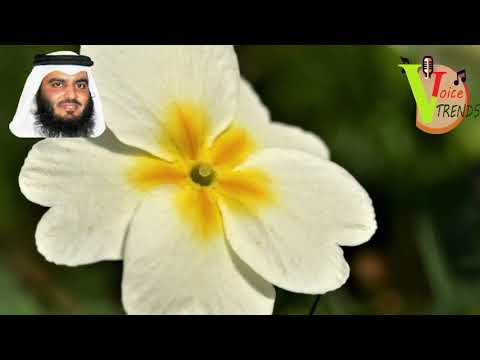 beautiful-recitation-of-surah-yaseen-by-ahmad-bin-ali-al-ajami-with-natural-images