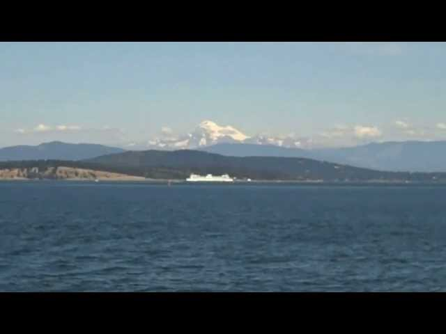 Whale watching with Island Mariner Cruises out of Bellingham WA