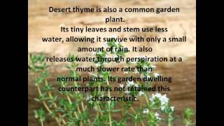 Desert Biome Video