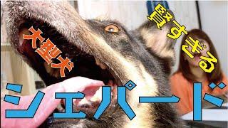 番組提供:ペットライン株式会社 http://www.petline.co.jp/ 泥棒撃退!!...