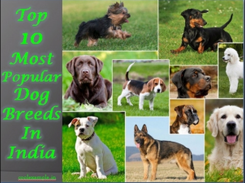 Top 10 dogs breed in india