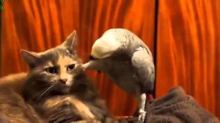 смешные животные видео прикольное видео домашних животных