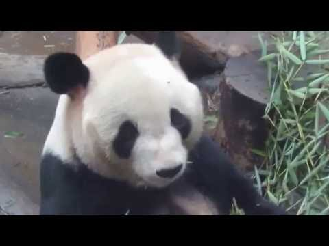 Cai Yun's elder brother Zhao Yang enjoying bamboo