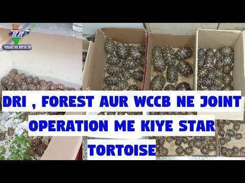DRI , Forest Aur WCCB Ne Joint Operation Me Kiye Star Tortoise | Hindustani Reporter |