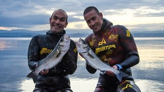 Spearfishing - CATCH and COOK - SEA BASS with Wild Herbs - Ψαροντούφεκο Λαβράκι Φρικασέ ✔